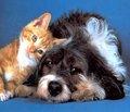 Домашние животные и сердечно-сосудистый риск