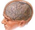 Результати клініко-інструментальних та патопсихологічних обстежень при діагностиці дисциркуляторної енцефалопатії