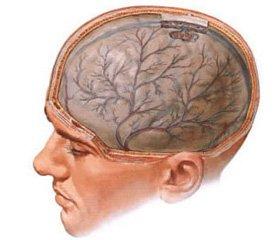 Системные проявления неспецифической воспалительной реакции при травматической болезни головного мозга