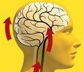 Гипертоническая энцефалопатия. Роль антигипертензивной терапии в профилактике и лечении