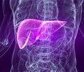 Гепатопротектори в лікуванні захворювань печінки: клініко-біохімічні механізми дії