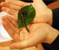 Новые возможности в лечении хронических токсических гепатитов и циррозов печени с использованием биогепаторегенерирующей сыворотки Гепазилтм Композитум