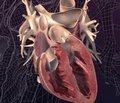 Руководство по диагностике и лечению гипертрофической кардиомиопатии: отчет рабочей группы Американского общества кардиологии/Американской ассоциации кардиологов (ACCF/AHA) по разработке практических рекомендаций — 2011