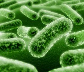 Бактеріальні лізати в практиці клінічного імунолога