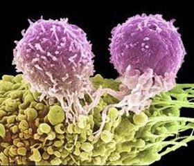 Открыт новый механизм регуляции старения раковых клеток
