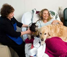 Общение с животными положительно влияет на людей