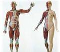 Половой диморфизм анкилозирующего спондилита