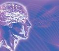 Физические нагрузки увеличивают объем мозга