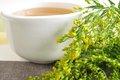 Ольденбургское исследование подтверждает эффективность экстракта золотарника приинфекциях мочевыводящих путей