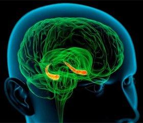 Нейрогенез у взрослых: от микроскопии  до магнитно-резонансной визуализации