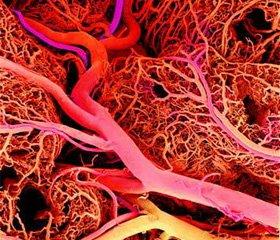 Нейропротекция в интенсивной терапии у пациентов с полиэтиологическим поражением ЦНС