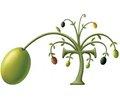 Клиническая эффективность применения оливкового мыла «Афродита» с добавлением лаванды у детей с атопическим дерматитом