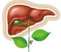 Поражения печени при системных заболеваниях соединительной ткани