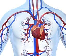 Фармакотерапия ишемической болезни сердца:  место статинов