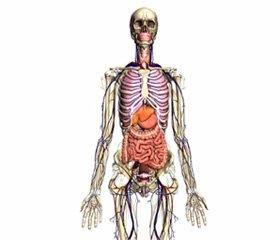 Анализ стабилограмм на основе математической модели тела человека какмногозвенной системы
