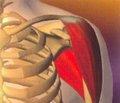 Возрастные аспекты повреждений стабилизирующих структур при травматической нестабильности плечевого сустава