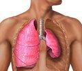 Значение морфологических изменений легких в хирургическом лечении больных с рецидивным и перемежающимся спонтанным пневмотораксом