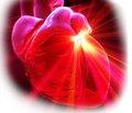 Неотложные состояния при приобретенных пороках сердца