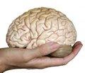 В 2019 году компания IBM планирует создать полную симуляцию головного мозга человека