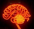 Brain Activity Map — новый масштабный проект по изучению мозга и его деятельности