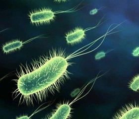 Прокариотические и эукариотические пробиотики
