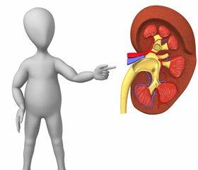 Ренопротекція блокаторами ренін-ангіотензинової системи