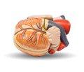 Зв'язок покращення швидкості клубочкової фільтрації на фоні терапії аторвастатином і зниження частоти госпіталізацій із приводу серцевої недостатності (від імені дослідників the Treatingto New Targets [TNT] Study)