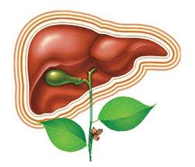 Сучасні можливості корекції функціонального стану печінки у хворих на цукровий діабет із використанням препарату Гепа-Мерц (L-орнітин-L-аспартат)