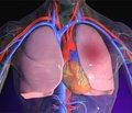Наружные симптомы у больных тромбоэмболией легочной артерии