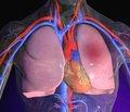 Сравнение ранней и поздней тромболитической   терапии у пациентов с тромбоэмболией   легочной артерии высокого риска