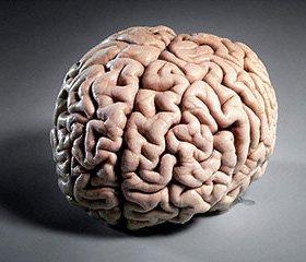 Применение экстракта гинкго билобы  в лечении пациентов с хроническими сосудистыми заболеваниями головного мозга