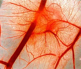 Клинико-патогенетическая взаимосвязь вегетативной и миофасциальной дисфункции (оценка эффективности применения препарата Кокарнит)