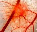 Вестибулярная дисфункция как следствие легкой черепно-мозговой травмы