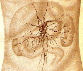 Особливості вегетативної регуляції у хворих на хронічні запальні захворювання кишечника з анемічним синдромом