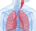 Активність показників плазмового протеолізу  та їх корекція у хворих на хронічне обструктивне  захворювання легень із супутнім хронічним панкреатитом