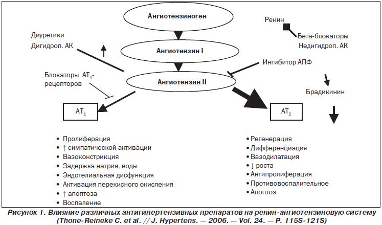 ангиотензина-2 Блокаторы бра рецепторов