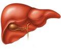 Заболевания печени и беременность