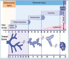 Сучасні погляди на онтогенез респіраторної системи